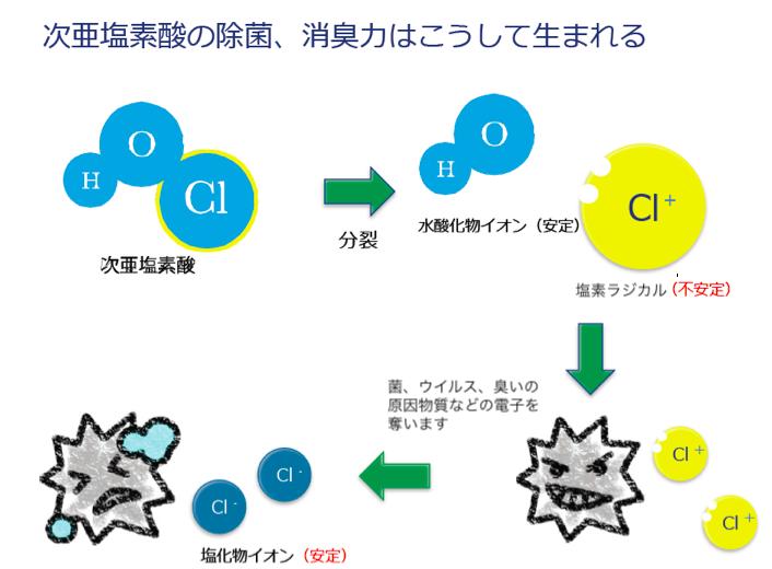 次亜塩素酸メカニズム