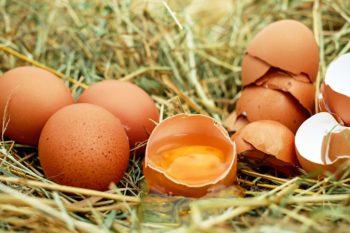 鶏卵を次亜塩素酸水で除菌