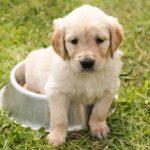 犬を飼っているキエルキンユーザー様の消臭に対する口コミは?vol34