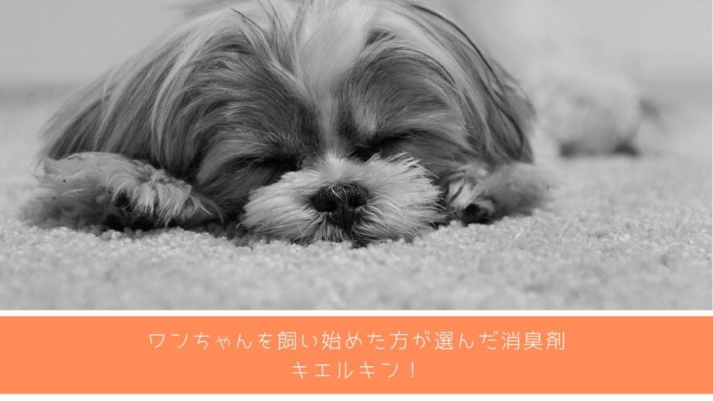 キエルキン 消臭剤 犬